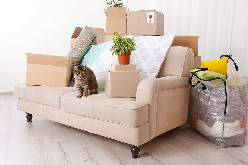 A cat sitting on a sofa surrounded by packed stuff
